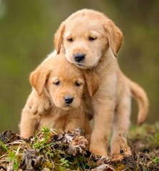 cute-lovable-puppy-playing-with-his-bro-635678806226834122-11518[1]